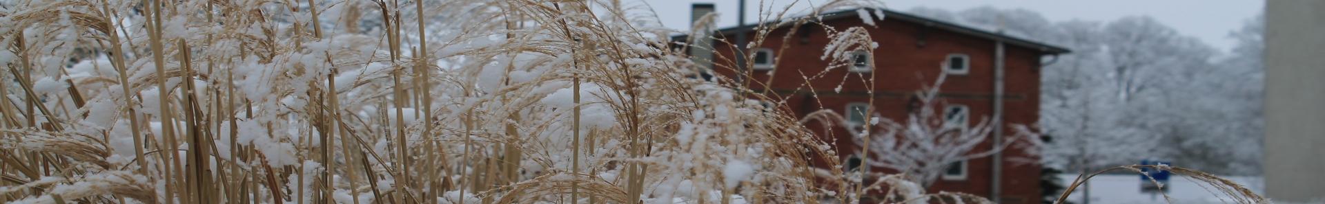 Banner - Eierspeicher im Winter