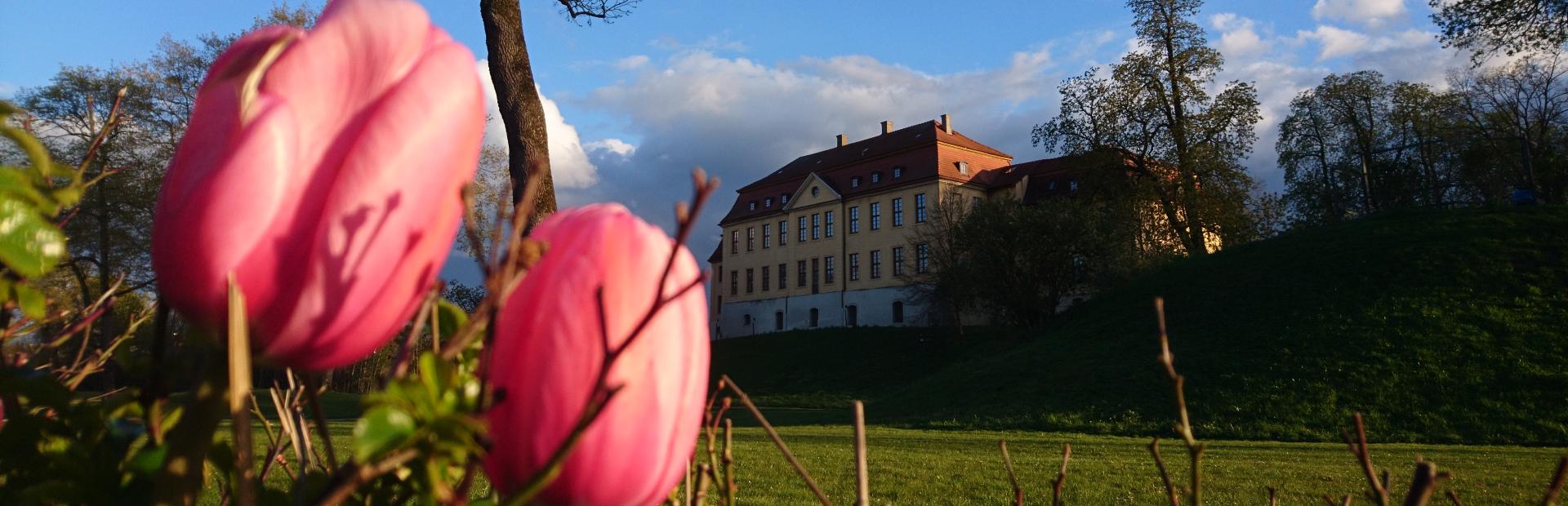 Banner Frühling Schloss 2021