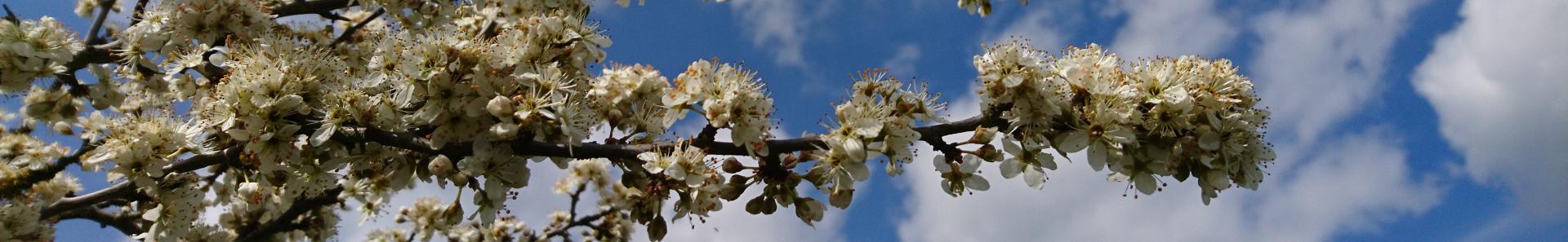 Banner Frühling Blüten