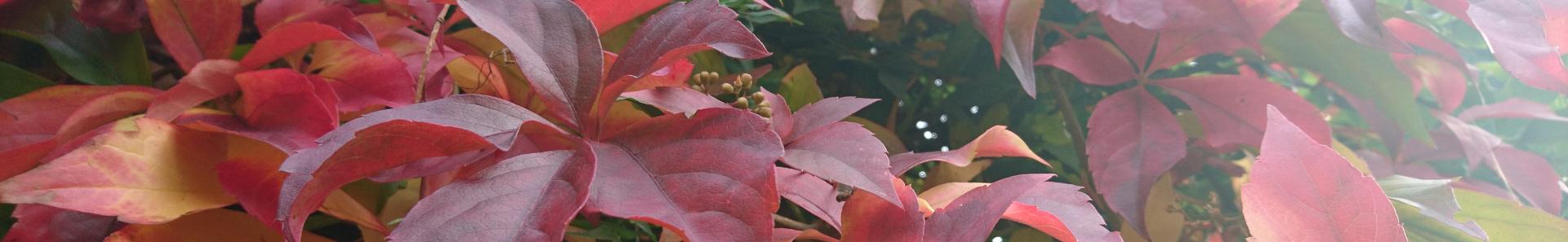 Banner - Herbst2021